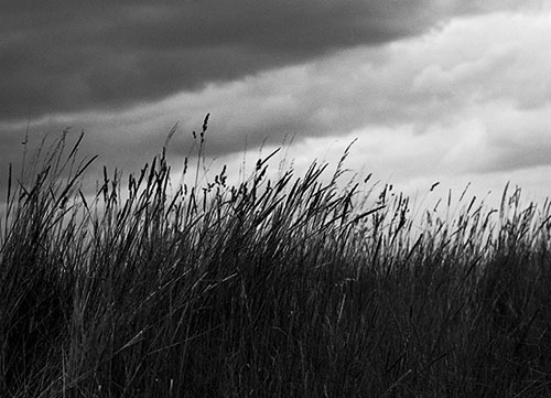 Storm Brewing, East Anglia, Copyright ⓒ 2006 Cate McRae; All Rights Reserved reserved