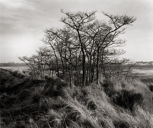 Winter Trees (Tree Clump), East Anglia, Copyright ⓒ 2007 Cate McRae; All Rights Reserved reserved