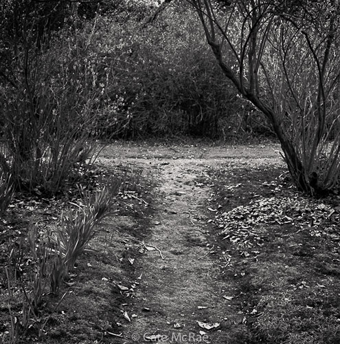 Where two paths meet © Cate McRae 2011